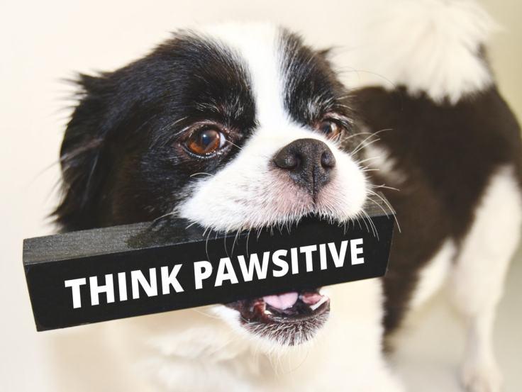 pawsitive-min